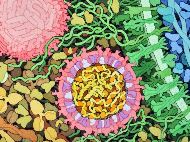 CDC'en betaler dig for zika-inficeret sæd