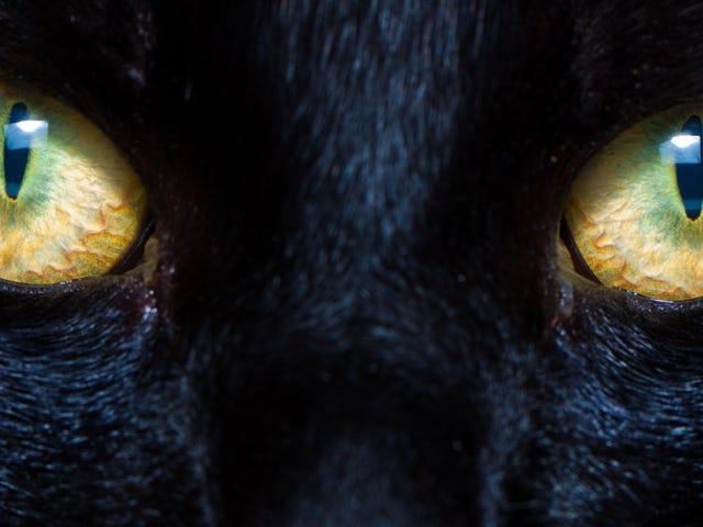 De videnskabsmænd, der formåede at se gennem en kat øjne