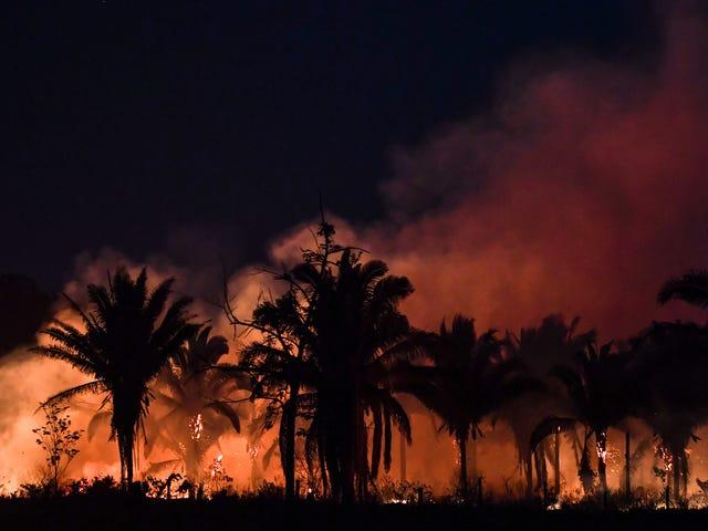 Les écosystèmes de la taille de la forêt amazonienne pourraient s'effondrer en quelques décennies