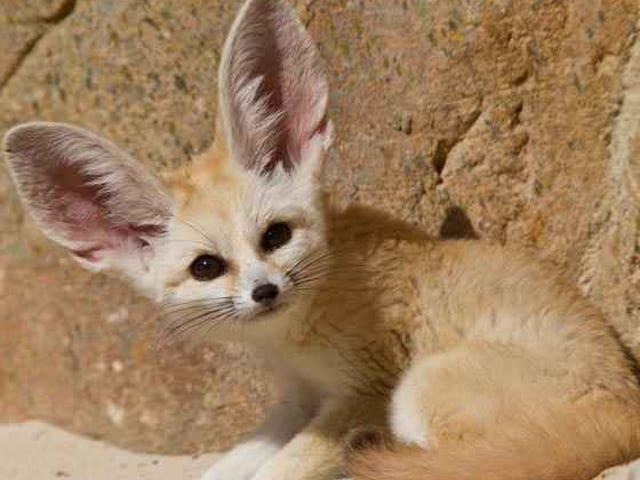 A message from team fennec fox.