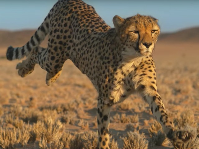 Reese Witherspoon gives female animals their due in the trailer for her Quibi show Fierce Queens