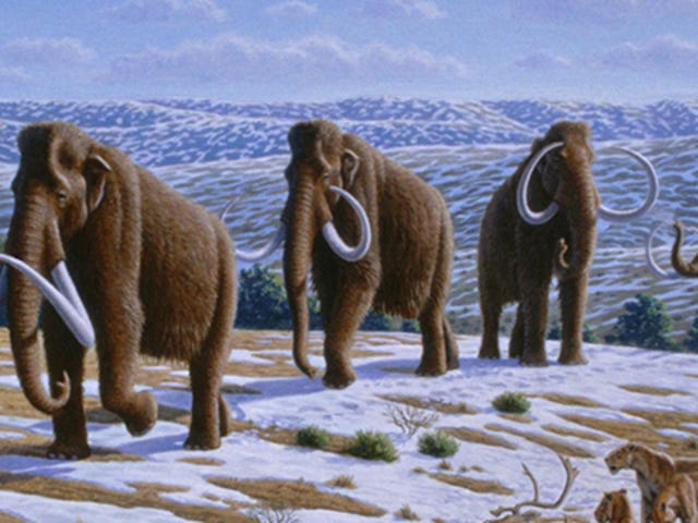 "Russian scientists: We have a ""high chance"" of cloning a wooly mammoth"