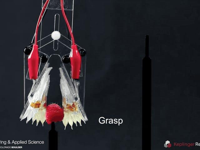 Ten miękki, samoleczący się robot naśladuje, jak poruszają się ludzkie mięśnie