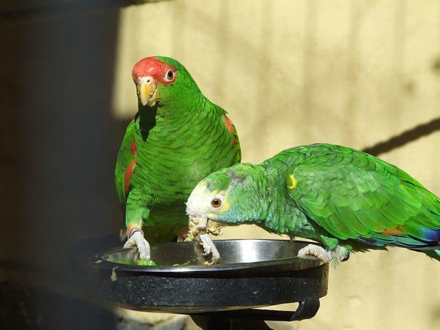 Salı günü Tweet: Backtalk Bird Compendium