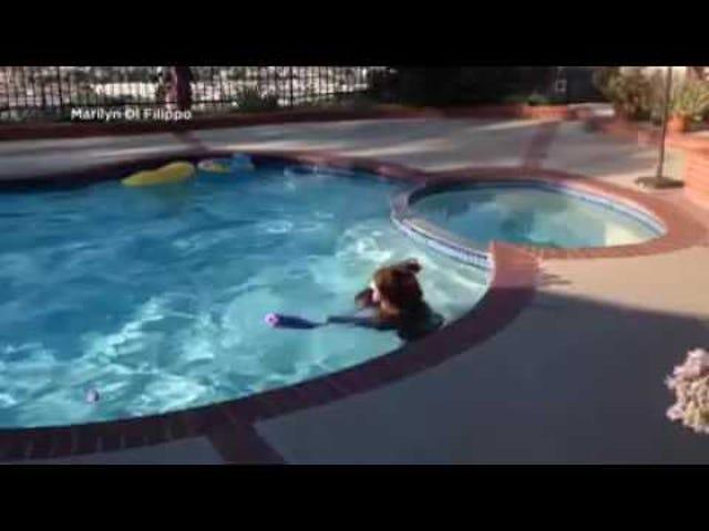 Ми отримали ведмедя в басейні, люди.  Рука мені, що лід холодне пиво.
