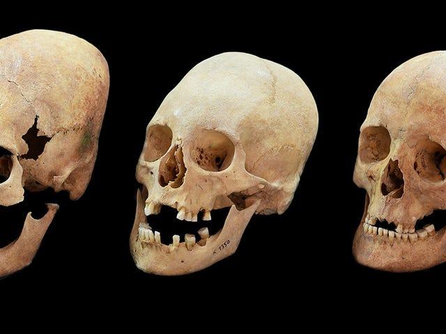 El misterio de estos cráneos alargados hallados en una tumba medieval tiene una nueva explicación