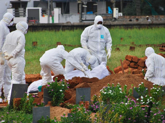 What Is Nipah, the Virus Spread by Bats That's Killing People in India?