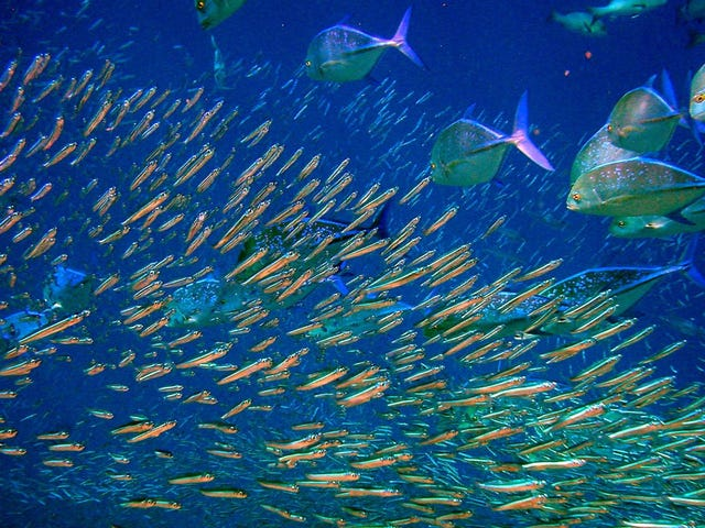 We Could Double the Number of Edible Fish in the Ocean by 2050