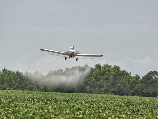 Carolina do Sul apenas aniquilou milhões de abelhas por acidente