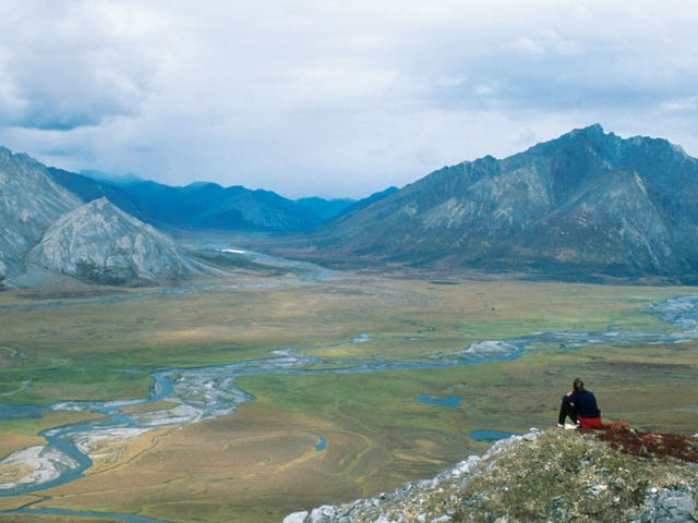 State Attorneys General Join the Fight to Protect the Arctic National Wildlife Refuge