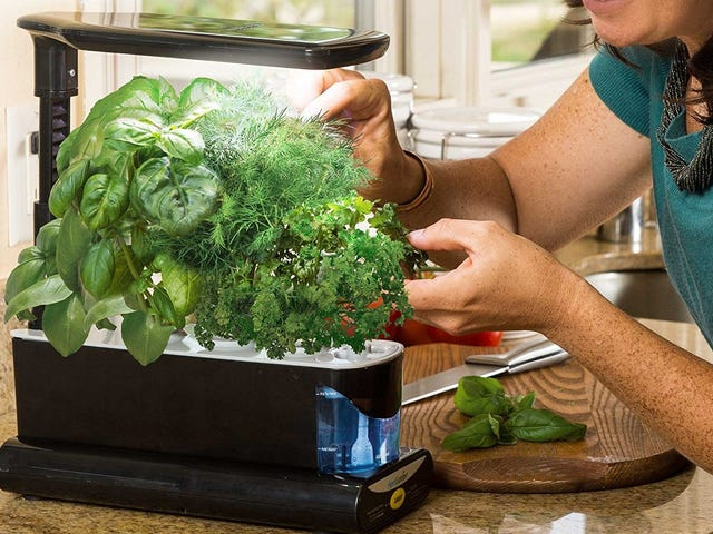Test Out Your Green Thumb Indoors With This $50 Countertop AeroGarden