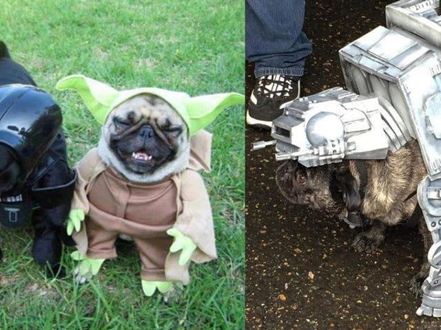 "<a href=""https://news.avclub.com/this-star-wars-pug-crawl-could-power-the-death-star-wit-1798247628"" data-id="""" onClick=""window.ga('send', 'event', 'Permalink page click', 'Permalink page click - post header', 'standard');"">This <i>Star Wars</i> pug crawl could power the Death Star with cuteness</a>"
