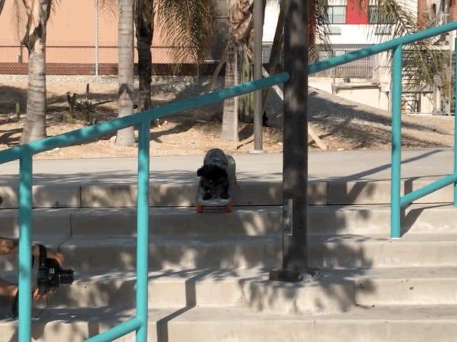 สเก็ตบอร์ดสุนัข Crushes Stair ชุด?  สเก็ตบอร์ดสุนัข Crushes ชุดบันได