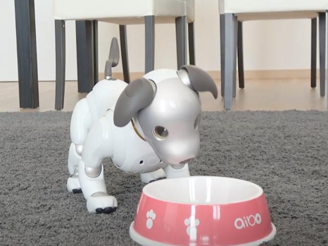Sony giver brugerne mulighed for at købe virtuel mad til deres robothunde