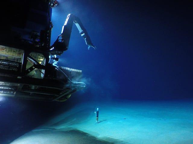 Visit to Biggest Underwater Volcano in Last 100 Years Reveals Deep Sea Mystery