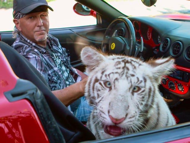 Tuleeko uusi jakso Tiger Kingistä Netflixiin ensi viikolla?