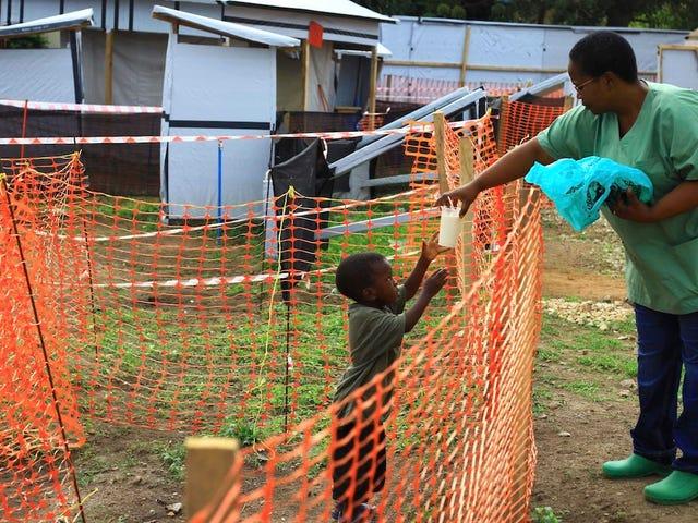 Com o aumento do número de mortos no surto de Ebola, a OMS declara declarar emergência de saúde global