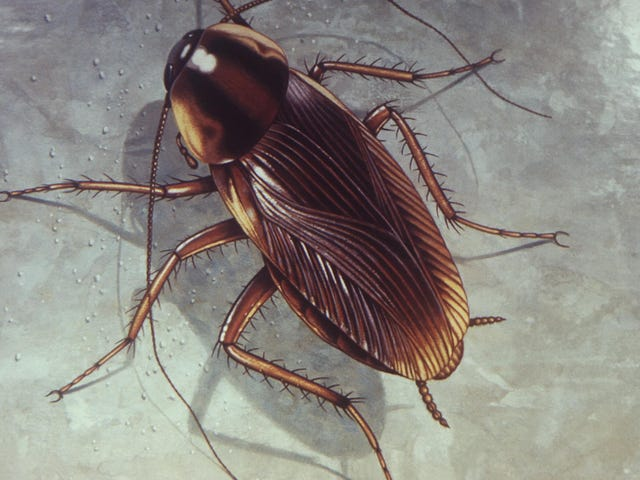 Bug Bombs Suck at Killing Roaches, and They Can Make You Sick