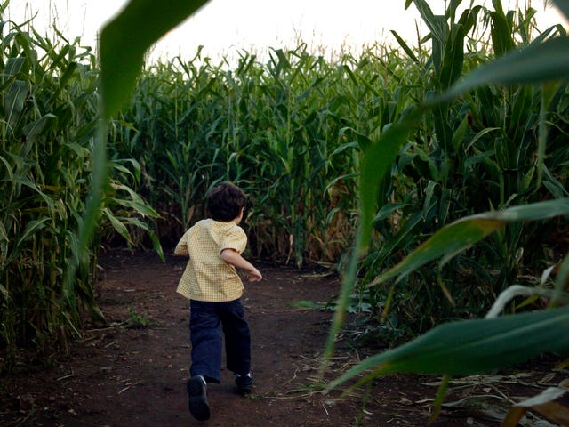 Let's all go to Indiana and get lost forever in this Stranger Things corn maze