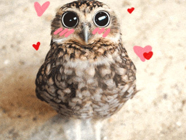 And a Good Valentine's Morning to You, My Lovelies!