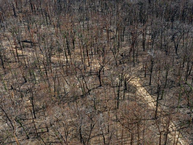 Khi tất cả các khu rừng bị đốt cháy