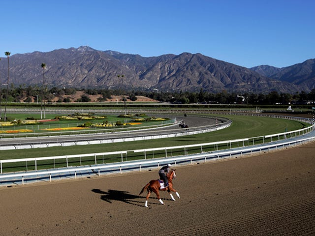 29th Horse Dies At Santa Anita One Day After Officials Tell Track To Stop Holding Races