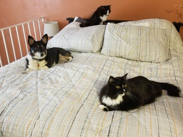 ทั้งหมด 3 critters ในนัดเดียว