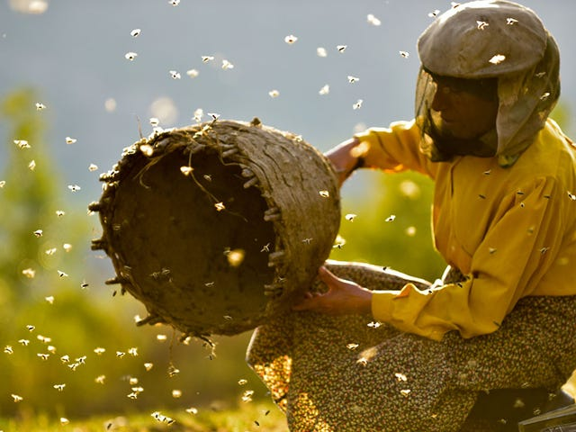 Honeyland couches an apocalyptic warning in a beekeeping documentary
