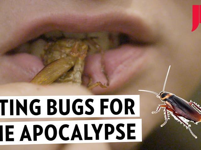 Nós comemos uma festa de insetos para obter uma perna (ou seis) no apocalipse