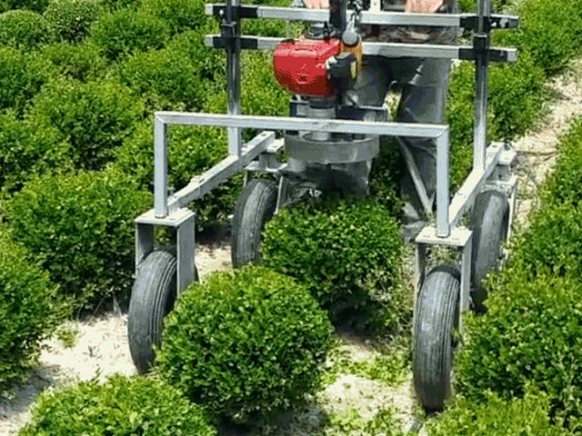 I'm Completely Mesmerized By This Machine Whose Only Function Is Making Tiny Hedge Spheres