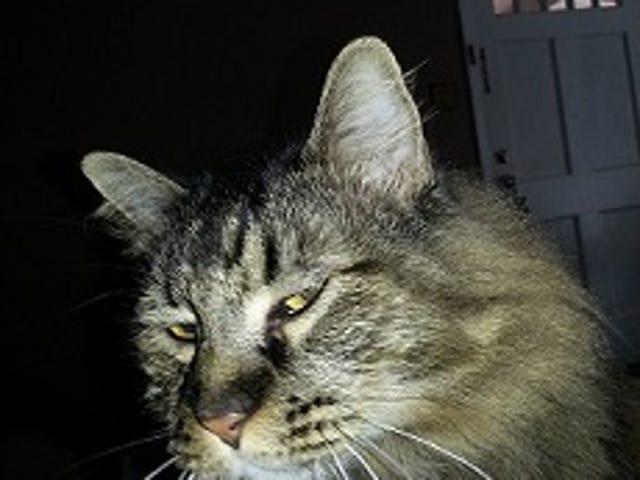 Cats... amirite?
