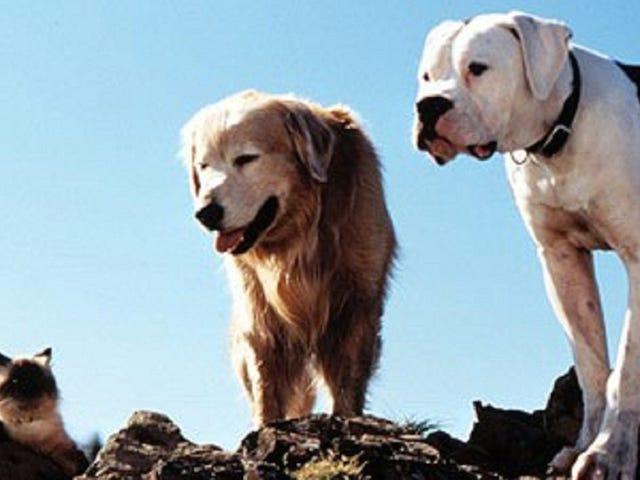 Akkurat som folk, blir hundene grå under stress