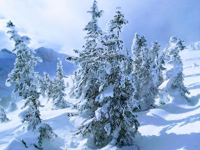 '18/'19 Ski Blog (Post #8) - Jackson Hole, WY