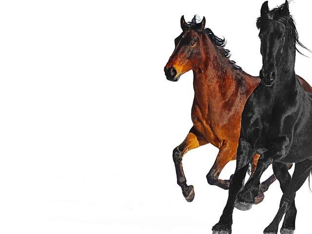 Deadspin Up toda la noche: caballos en la espalda
