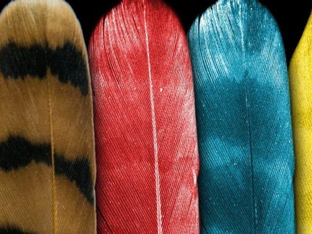 恐竜色の秘密を保持する鳥の羽のX線画像