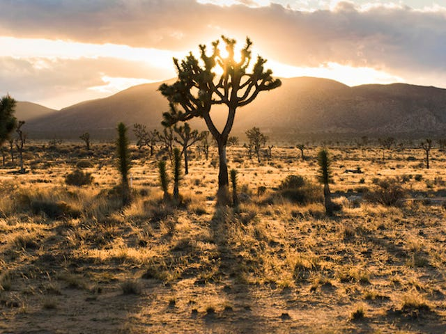Relax in the Tranquility of a Desert Sunset