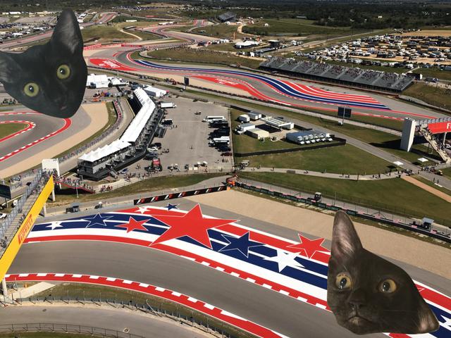 Nós fomos à procura de gatos na corrida de Fórmula 1 em Austin