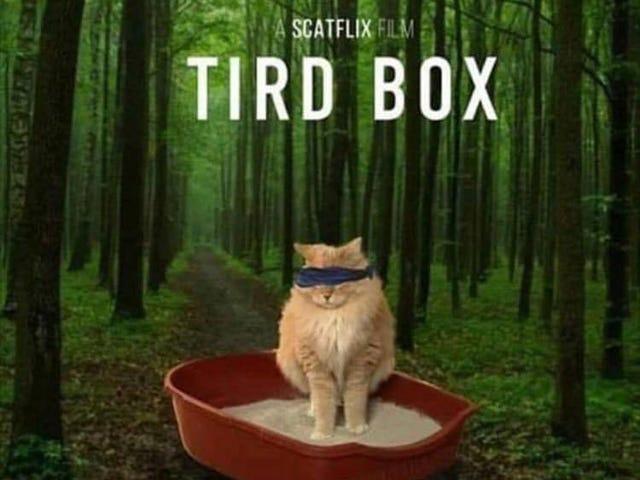 Bird Box challenge for the felines