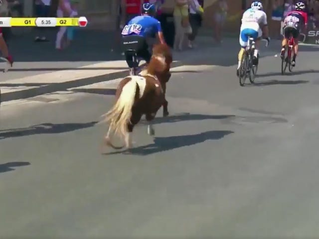 Tiny Horse Briefly Becomes Pro Cyclist