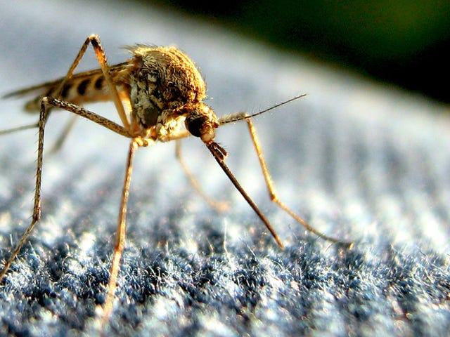 Το Πειραματικό Εμβόλιο Dengue προστατεύει κάθε συμμετέχοντα στη δοκιμή μικρής κλίμακας