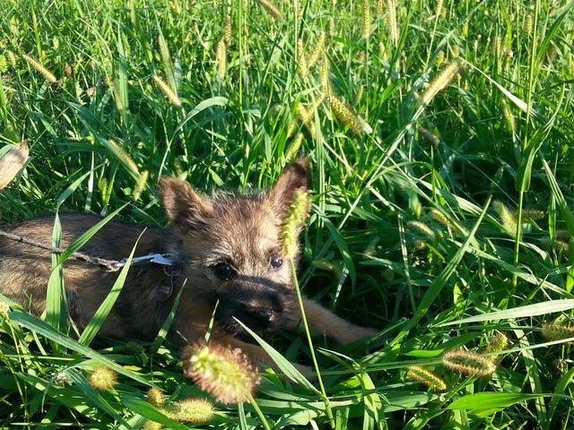 หญ้าสูง