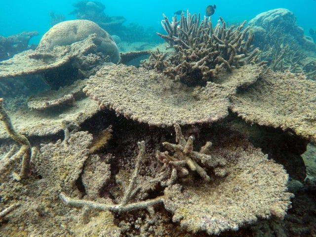 Das Great Barrier Reef erlitt gerade das schlimmste Absterben, das jemals gesehen wurde