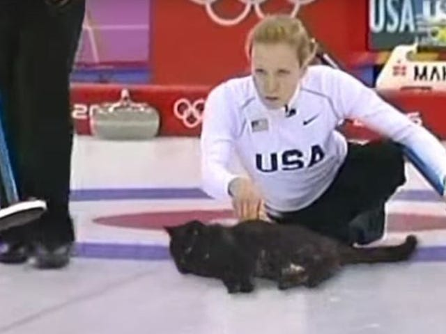 Alle hagler den største olympiske sporten: Cat curling