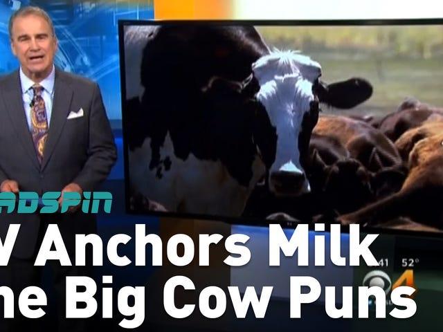 地元のテレビアンカーはすべて、大きな牛について同じパンを搾乳した