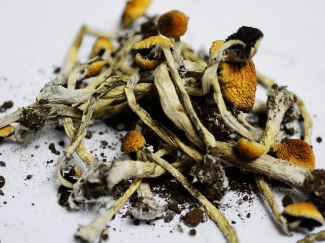 科学家终于解开了魔法蘑菇的食谱