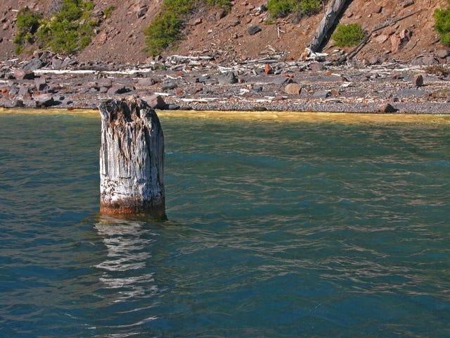 Denne træstamme har svævet lodret i 120 år, og ingen ved, hvordan fanden gør det