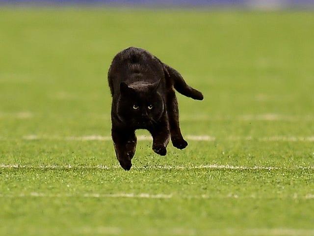NFLはルールを変えて猫に遊ばせるべきだ