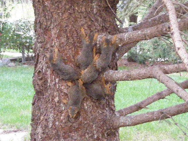 Six Baby Squirrels With Tails Hopelessly Tangled Together Rescued in Nebraska
