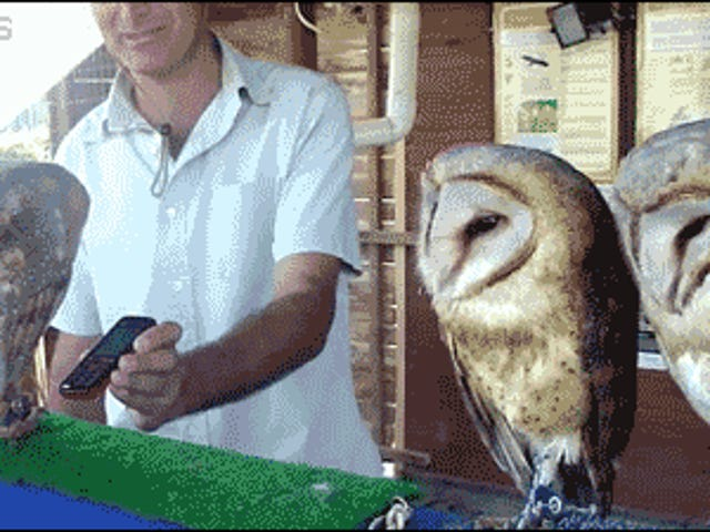 Saturday GIF Party - Have a hoot edition