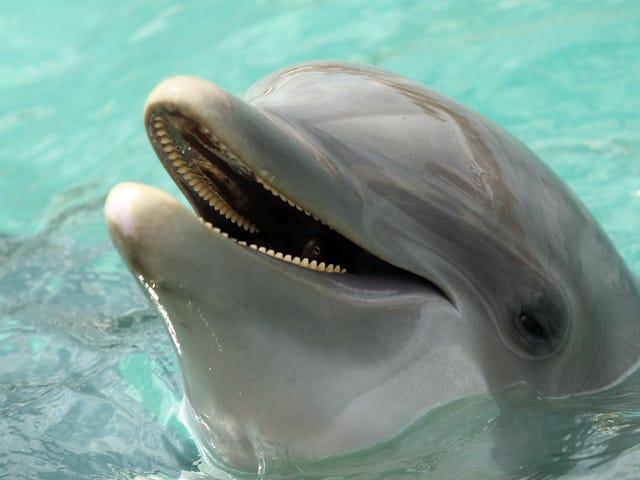 Por favor, ore pelos golfinhos militares ucranianos que agora estão mortos